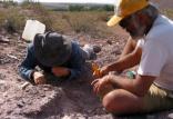 کشف فسیل دایناسور,اخبار علمی,خبرهای علمی,طبیعت و محیط زیست