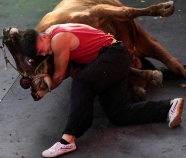 تصاویر مبارزه با گاو نردر چین,تصاویر کشتی گیران چینی درمبارزه با گاو,عکس های کشتی با گاو درچین