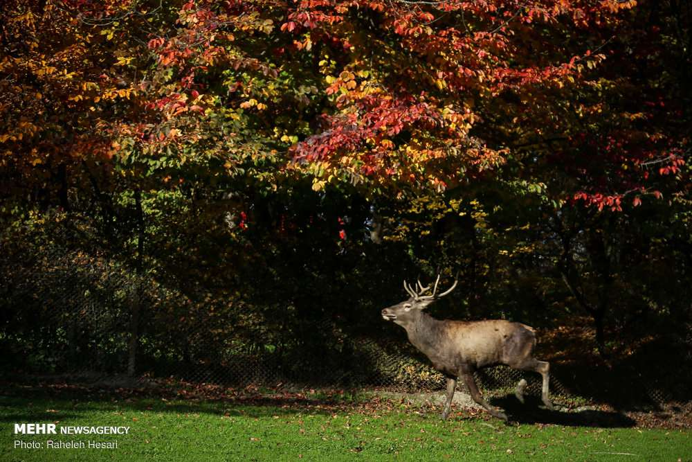 تصاویرزیبا از برگ ریزان پاییز,عکس های دیدنی پاییز,تصاویر روزهای پایانی پاییز