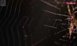 ویدئو/چگونگی شکلگیری تار عنکبوت