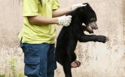 تصاویر عجیبترین قاچاقهای حیوانات در دنیا,تصاویر  نحوه نقل و انتقال عجیب حیوانات,تصاویر قاچاق حیوانات
