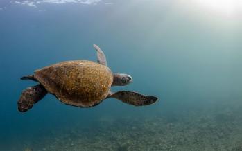 تصاویردنیای زیر آب,تصاویر موجودات ساکن اعماق اقیانوس ها,عکس های زیبا ازاعماق اقیانوس ها