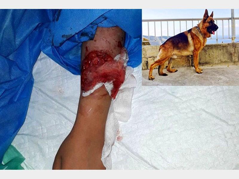 وکیل پایه یک دادگستری: حبس در انتظار صاحب سگ «حادثه لواسان»