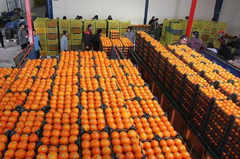 قیمت پرتقال شب عید ۳۱۰۰ تومان تعیین شد