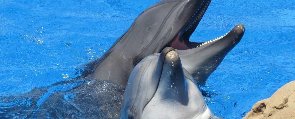 خواستگاری با دلفین,اخبار جالب,خبرهای جالب,خواندنی ها و دیدنی ها