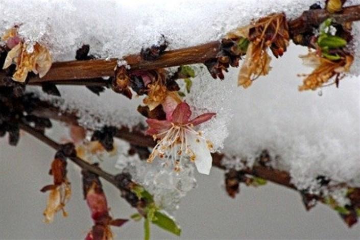 اکسیر کنترل سرمازدگی,اخبار علمی,خبرهای علمی,پژوهش