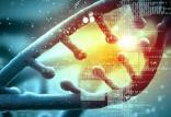 ابزار مهندسی ژنتیک,اخبار علمی,خبرهای علمی,پژوهش
