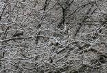 بارش برف,اخبار اجتماعی,خبرهای اجتماعی,محیط زیست