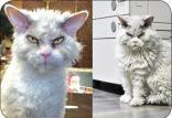 عصبانی ترین گربه دنیا,اخبار جالب,خبرهای جالب,خواندنی ها و دیدنی ها