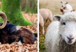 اجداد حیوانات امروزی,اخبار علمی,خبرهای علمی,طبیعت و محیط زیست