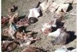 لاشههای الاغهای ذبح شده در ابهر,اخبار علمی,خبرهای علمی,طبیعت و محیط زیست
