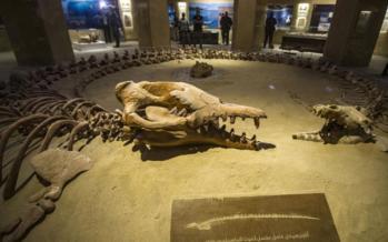 کشف بقایای یک نهنگ,اخبار علمی,خبرهای علمی,طبیعت و محیط زیست