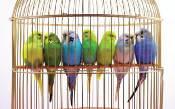 محصولات مخصوص پرندگان زینتی,اخبار علمی,خبرهای علمی,پژوهش