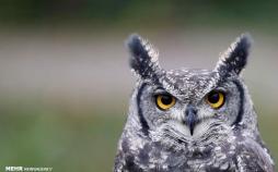 تصاویر دیدنی جغدها,عکس های جالب از جغد,عکسهای دیدنی و جالب از پرندگان