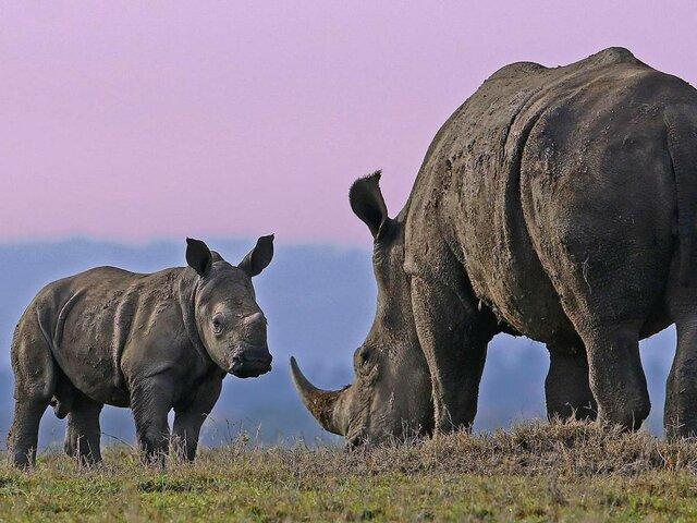 انقراض حیوانات,اخبار علمی,خبرهای علمی,طبیعت و محیط زیست