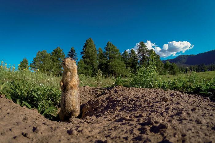 رفتارهای انسانی در حیوانات,اخبار جالب,خبرهای جالب,خواندنی ها و دیدنی ها