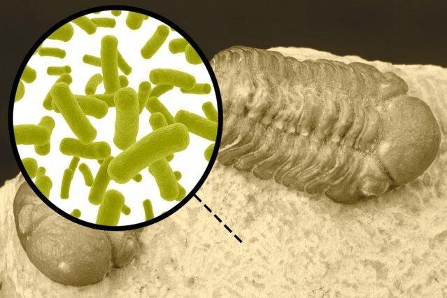 تکامل باکتریها,اخبار پزشکی,خبرهای پزشکی,تازه های پزشکی