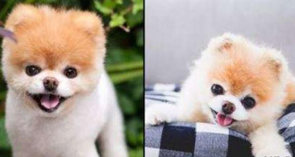 سگ مشهور شبکه های اجتماعی,اخبار جالب,خبرهای جالب,خواندنی ها و دیدنی ها