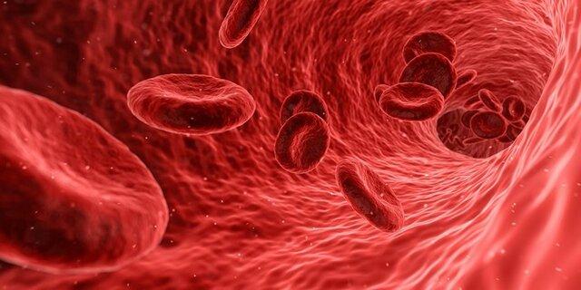 سلول خونی,اخبار پزشکی,خبرهای پزشکی,تازه های پزشکی