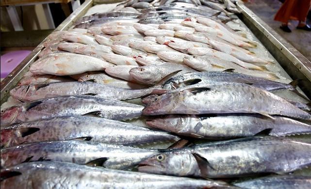 ماهی,اخبار اقتصادی,خبرهای اقتصادی,کشت و دام و صنعت