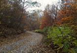 جنگلهای هیرکانی,اخبار علمی,خبرهای علمی,طبیعت و محیط زیست