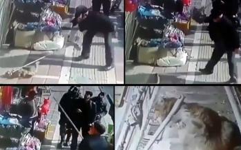 حیوانآزار در تهران,اخبار اجتماعی,خبرهای اجتماعی,محیط زیست