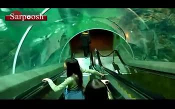 فیلم/ خاصترین پله برقی دنیا که از وسط آکواریوم میگذرد