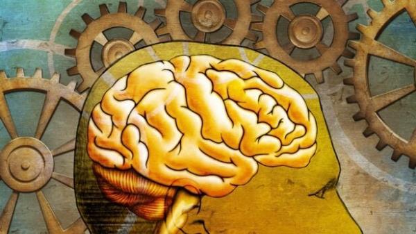 عملکرد مغز انسان,اخبار پزشکی,خبرهای پزشکی,تازه های پزشکی