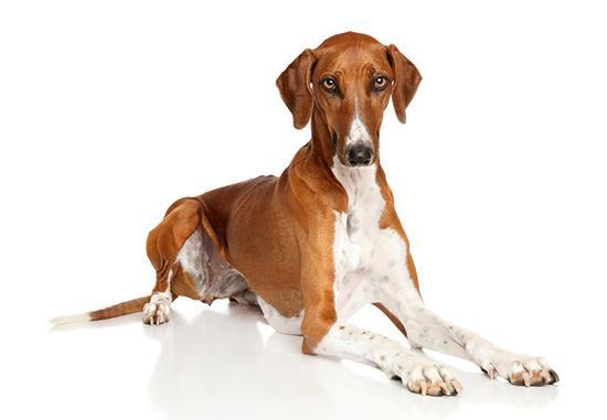 گرانترین سگهای دنیا,اخبار جالب,خبرهای جالب,خواندنی ها و دیدنی ها