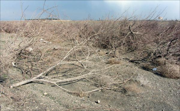 قطع درختان,اخبار علمی,خبرهای علمی,طبیعت و محیط زیست