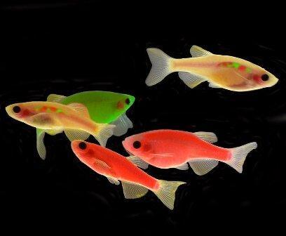 ماهی زبرا,اخبار علمی,خبرهای علمی,طبیعت و محیط زیست