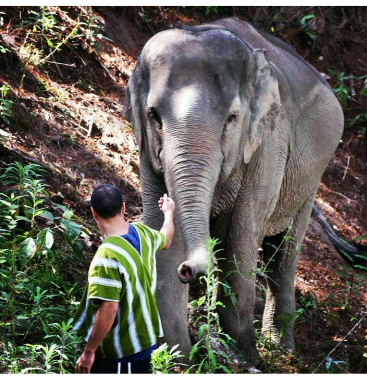 97 12 c33 567 - زندگی مشترک خانواده ای با فیل ها