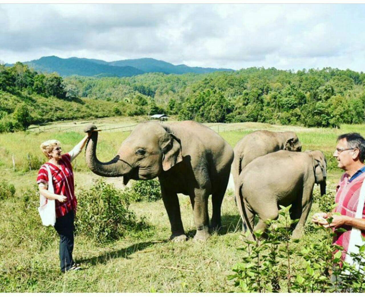 97 12 c33 573 - زندگی مشترک خانواده ای با فیل ها