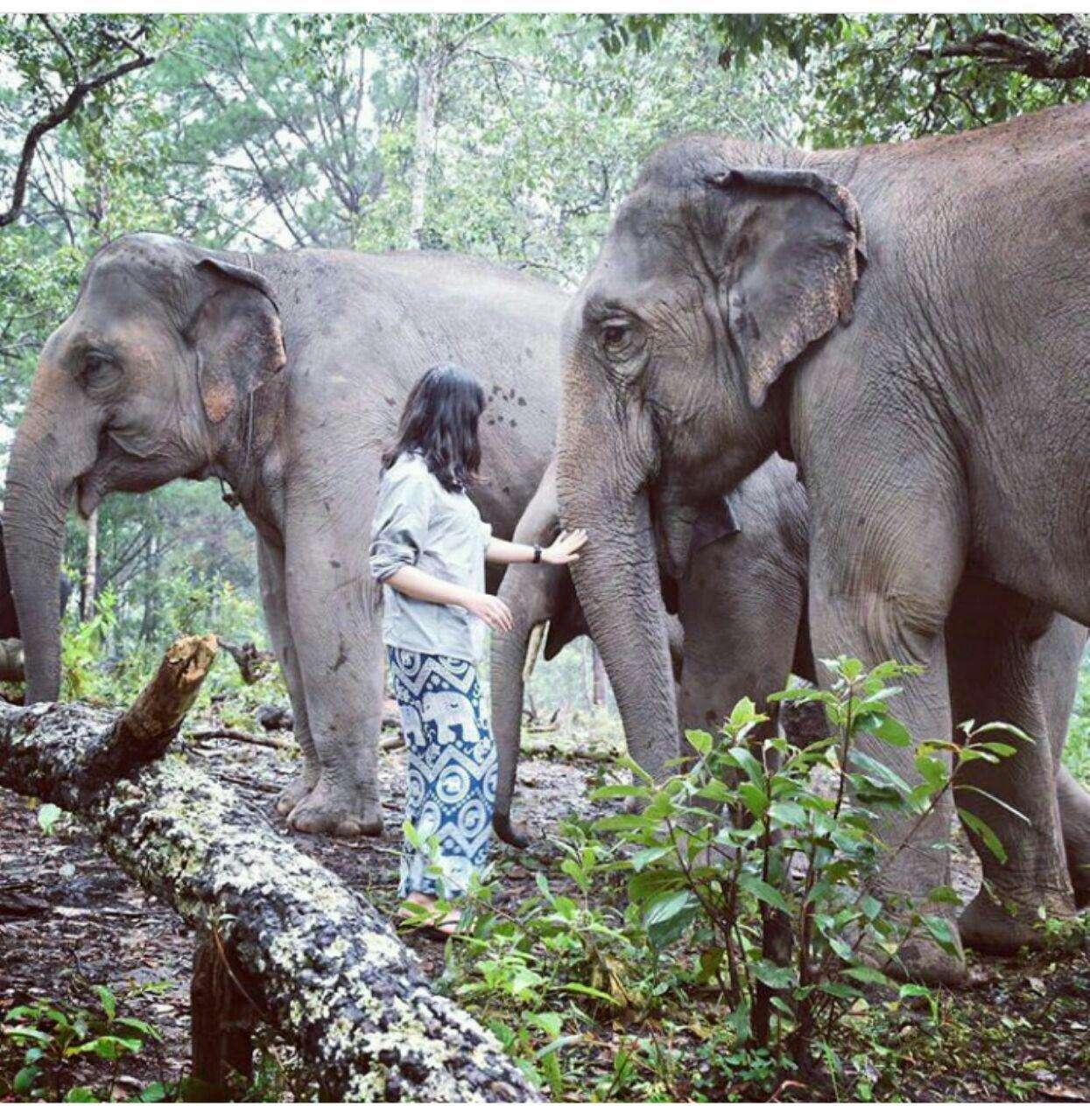 97 12 c33 574 - زندگی مشترک خانواده ای با فیل ها