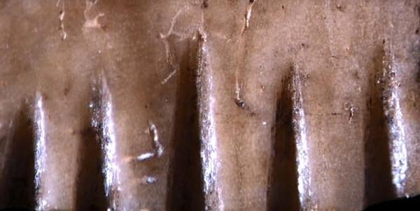 97 12 c35 1653 - کشف قدیمیترین ابزار خالکوبی جهان+تصویر