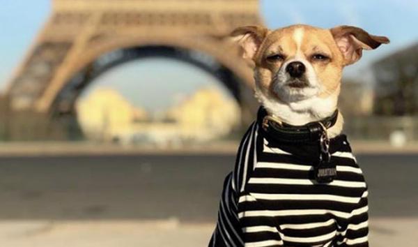 سفر سگ به دور دنیا,اخبار جالب,خبرهای جالب,خواندنی ها و دیدنی ها