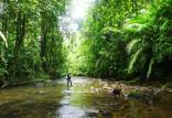 جنگل های شمال,اخبار علمی,خبرهای علمی,طبیعت و محیط زیست