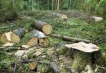 جنگل خواری,اخبار علمی,خبرهای علمی,طبیعت و محیط زیست