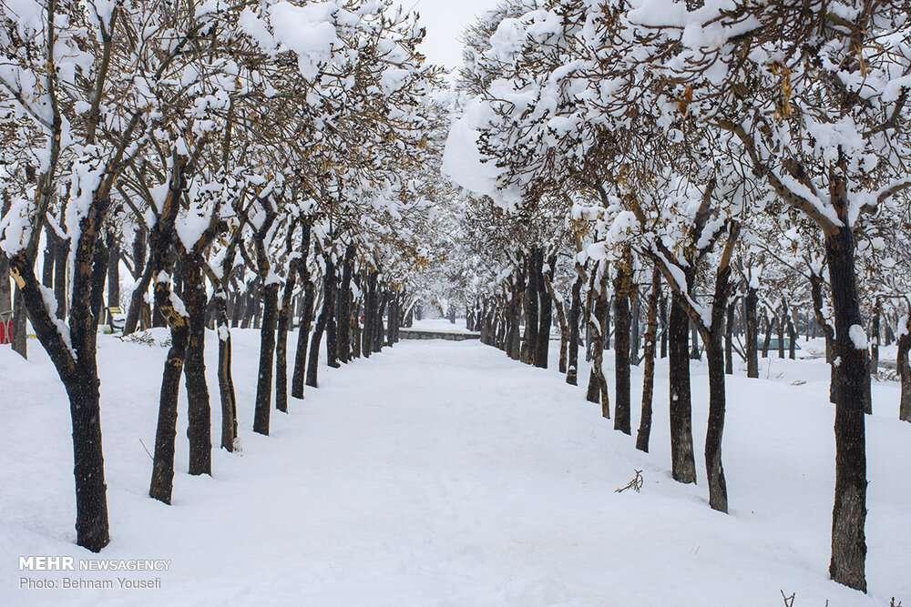 تصاویر بارش برف در اراک,تصاویر بارش برف در همدان,عکس های بارش برف در اراک و همدان