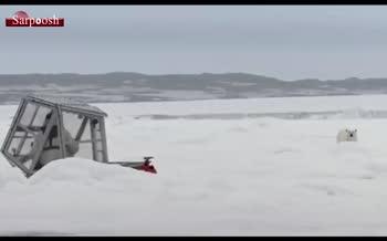 ویدئو/ حمله خرس قطبی به فیلمبردار