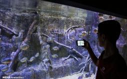 عکس های تونل آکواریوم اصفهان,عکسهای آکواریوم اصفهان در ناژوان,تصاویر تونل آکواریوم اصفهان