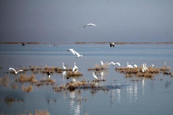 دریاچه نمک,اخبار اجتماعی,خبرهای اجتماعی,محیط زیست