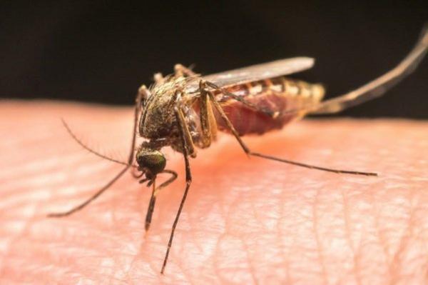 افزایش بیماری های ناشی از نیش پشه با تشدید تغییرات اقلیمی