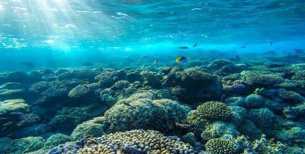 محیط زیست,اخبار علمی,خبرهای علمی,طبیعت و محیط زیست