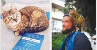 گربه جهانگرد,اخبار جالب,خبرهای جالب,خواندنی ها و دیدنی ها