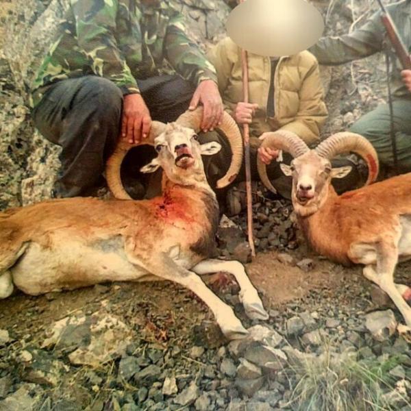 دستگیری ۱۰۳۹ شکارچی متخلف درخراسان رضوی/۳۰ میلیارد ضرر به محیط زیست
