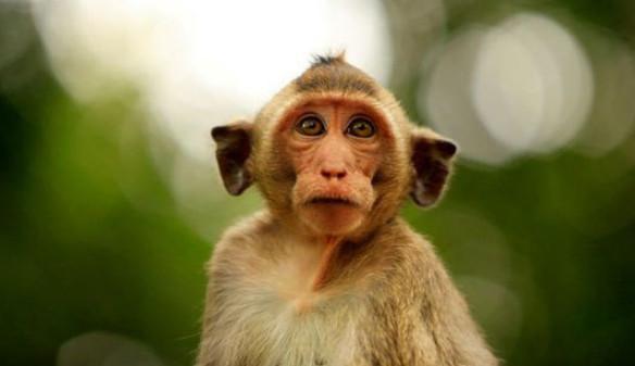 حیوانات مرتکب به جرم,اخبار جالب,خبرهای جالب,خواندنی ها و دیدنی ها
