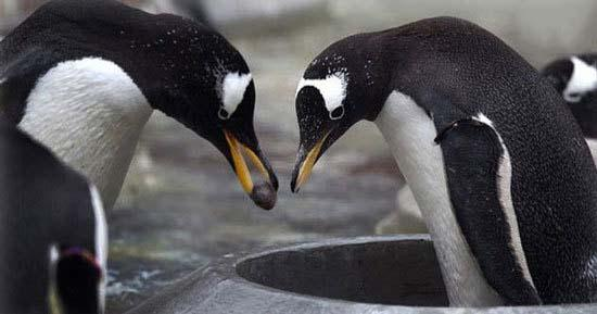 هدیه دادن در دنیای حیوانات,اخبار جالب,خبرهای جالب,خواندنی ها و دیدنی ها
