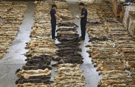 پوست حیوانات وحشی,اخبار علمی,خبرهای علمی,طبیعت و محیط زیست