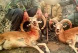 شکارچیان,اخبار علمی,خبرهای علمی,طبیعت و محیط زیست
